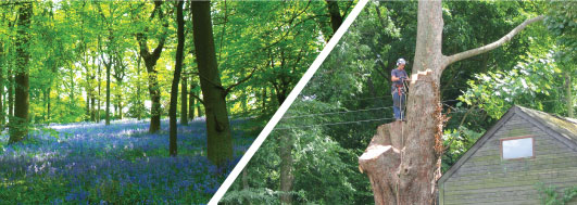 tree surgery, tree surveys, landscaping, woodland management powys wales